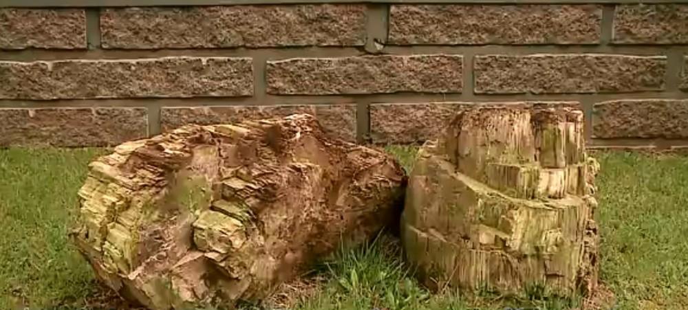 Fóssil com aproximadamente 275 milhões de anos é encontrado em Criciúma. — Foto: Reprodução/NSC TV
