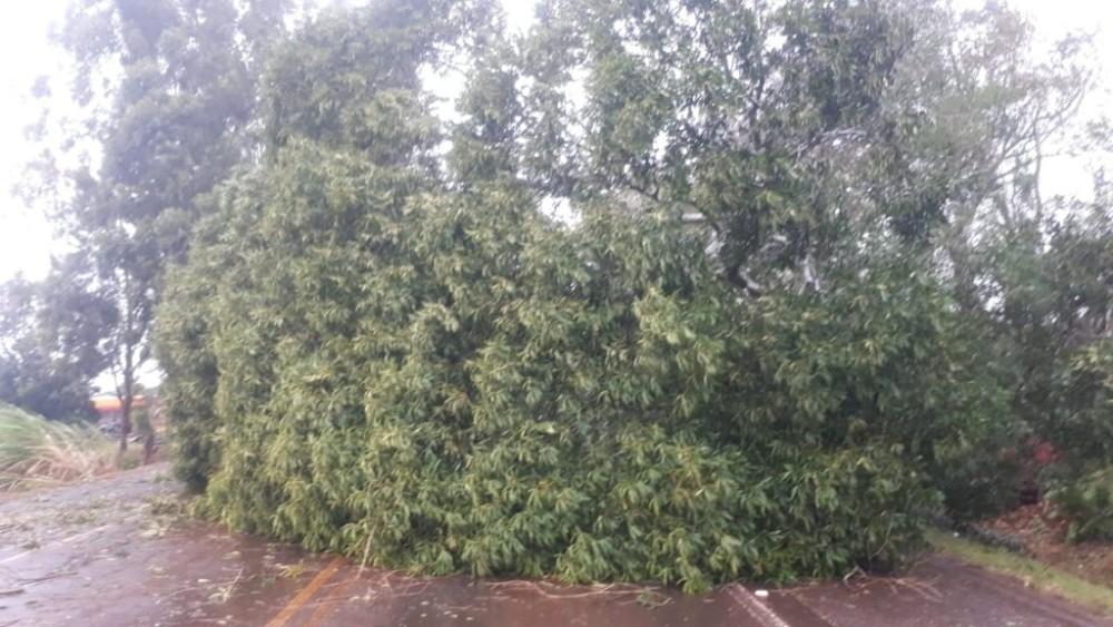 Temporal causa destelhamento queda de árvores e bloqueio da BR 468 em Bom Progresso.