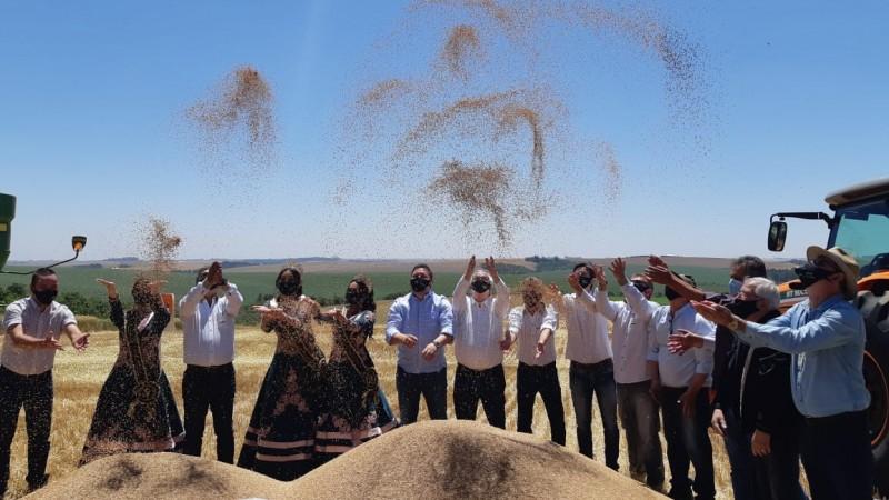 Área cultivada de trigo teve expansão de 20% esta safra - Foto: Cleuza Brutti