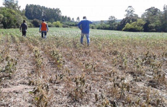 A falta de chuvas no Estado prejudica os produtores rurais. Foto: Arquivo/Defesa Civil