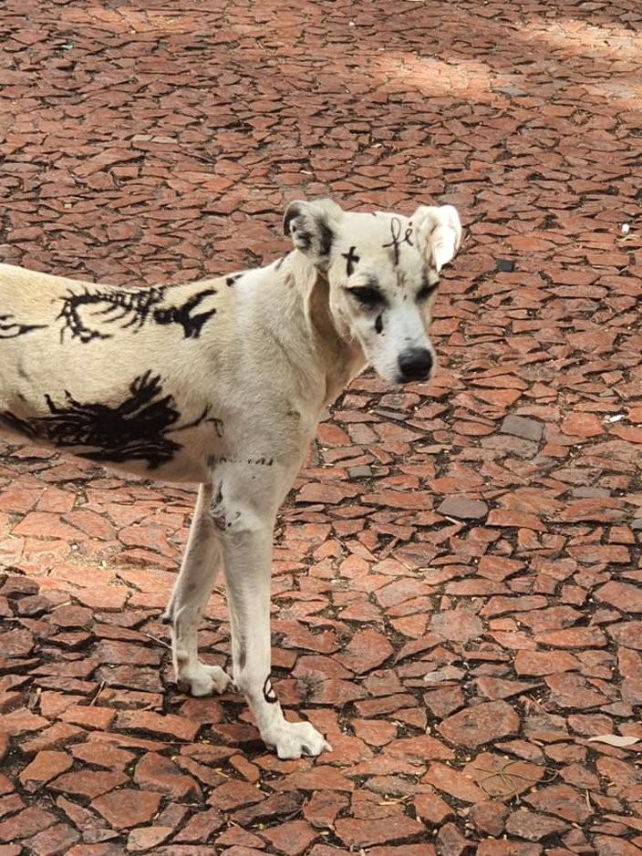 Cão aparece com tatuagens no Centro Histórico, e dono é notificado pela prefeitura