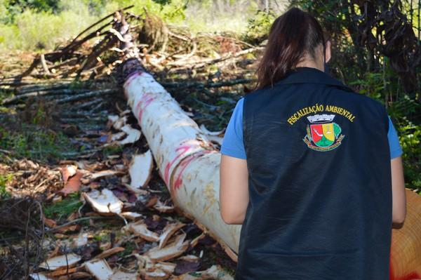 Foto: Ascom Prefeitura/Palmeira das Missões