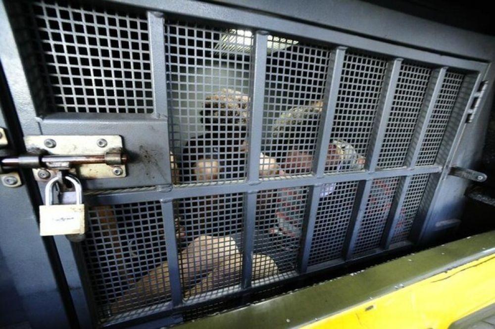 Delegacias do RS têm mais de mais de cem presos em viaturas e lotando celas