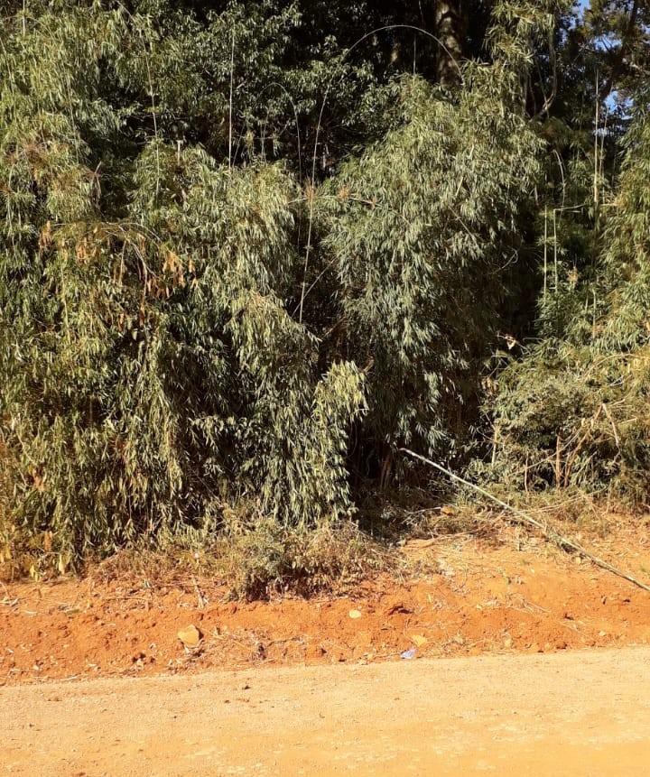 Homem cai de árvore, sofre acidente de carro ao ser socorrido e morre no norte gaúcho