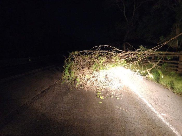 Árvore caiu na BR-158, Santa Maria e Itaara Foto: Defesa Civil Itaara / Divulgação