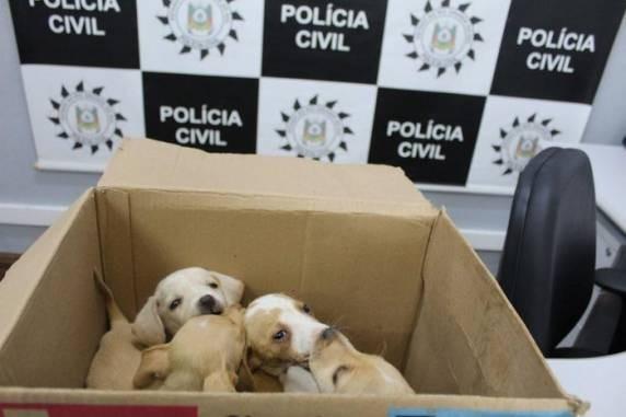 Mãe e filha são encaminhadas a presídio em Guaíba por abandonarem cães em Novo Hamburgo